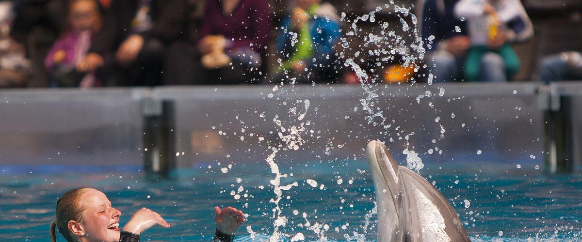 Bestel snel weer tickets voor Boudewijn Seapark